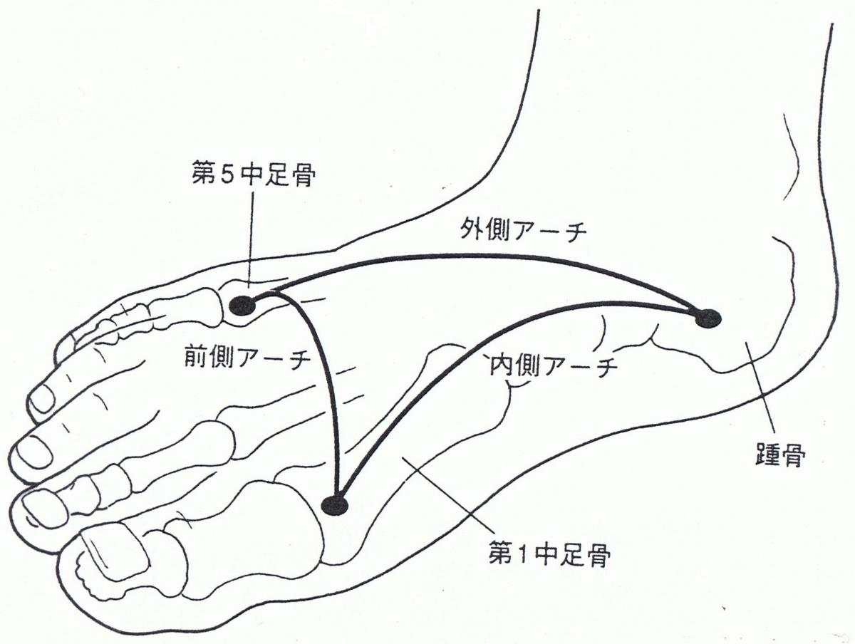 足のアーチと中足骨